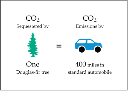 CO2 sequestered by one douglas-fir tree equals CO2 emissions by driving 400 miles in a standard automobile